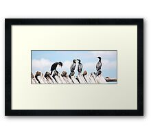 Funny cormorants Framed Print