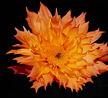 Fire Flower. by khadhy