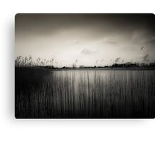 Water Reeds #25 Canvas Print
