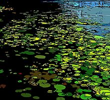 Lily Pads on Chautauqua Lake by Sarah Niebank
