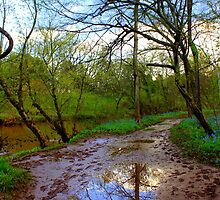 Reflection at Stone Bridge by Cecilia Carr