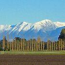 Row of Trees, NZ by John Brotheridge