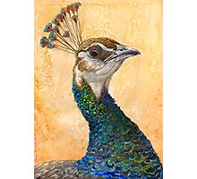 Peahen Photographic Print