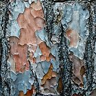 Tree bark abstract by Mortimer123