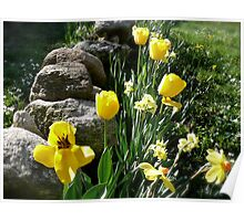 Tulips, Daffodils, and Stones, Front Yard in April Series 2009 Poster
