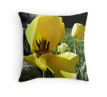 The First Tulip in the Morning Sun, Front Yard in April Series 2009 Throw Pillow