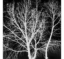 Ghost Trees Photographic Print