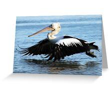 Pelican - skimming the water Greeting Card