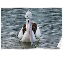 Young Pelican Poster