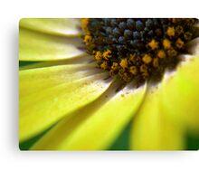 PollenFlower Canvas Print