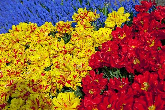 Spring Blooms - Keukenhof Gardens by Alison Cornford-Matheson