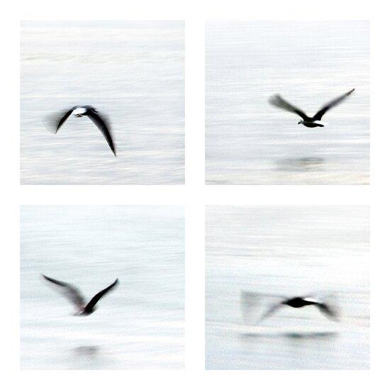 Wings by Barbara  Corvino