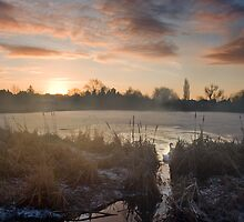 Bedworth Sloughs by Andy Morley