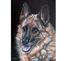 Rocky, German Shepherd Dog Photographic Print