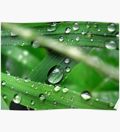 Green Grass Drops Poster