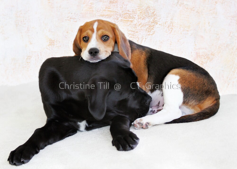 Playful Pals - Cane Corse & Beagle by Christine Till  @    CT-Graphics