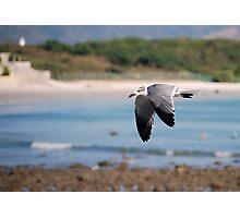 Coastal flyer Photographic Print
