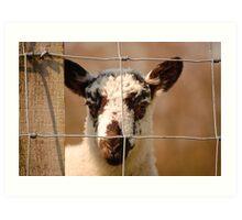 Inquisitive Lamb Art Print