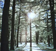 The White Light by TimBehuniak
