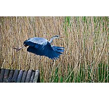 Taking Flight~ Photographic Print