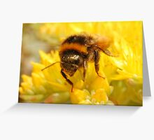 Bumble Bee #2 Greeting Card
