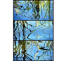 Pond Life - Triptych Photographic Print