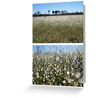 Morning Frost on Dangars Lagoon - Diptych Greeting Card