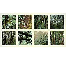 Alpine Rainforest Photographic Print