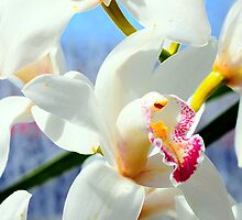 Beautiful Orchids by Kathleen Struckle