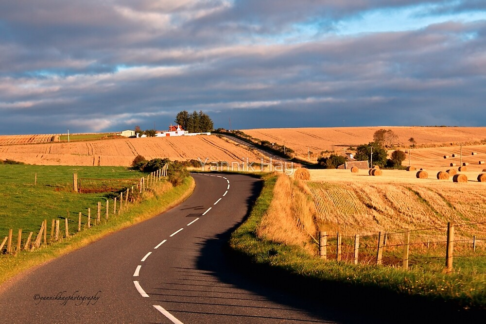 Winding Road Across the Golden Fields, Aberdeenshire, Scotland by Yannik Hay