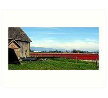Tulip Festival Fields of Glory Art Print
