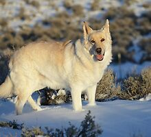 Dude Dog on Snow by SB  Sullivan