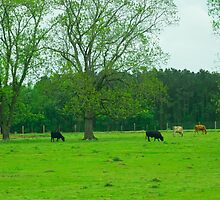 Steaks, oh I mean Cows, in the meadow by AlixCollins