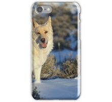 Dude Dog on Snow iPhone Case/Skin