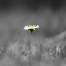 Daisy view by LisaRoberts