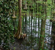 Cypress Trees Growing in Swan Lake by AlixCollins