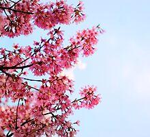 {hello spring} by meg4m