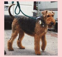 Well-trained Airedale Terrier Kids Clothes