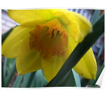 Baby Daff Poster