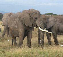 Elephants in Amboseli by Lilian Marshall