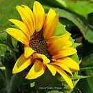 You are my sunshine by Ronee van Deemter