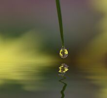 Small Drop by AnnieSnel