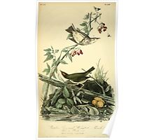 James Audubon Vector Rebuild - The Birds of America - From Drawings Made in the United States and Their Territories V 1-7 1840 - Golden Crowned Weyland Thrush Poster
