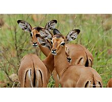 ARE WE SAFE HERE - BABY  IMPALA – Aepyceros melampus melampus - *ROOIBOK* Photographic Print