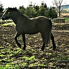 Horse In The Sun by terrebo