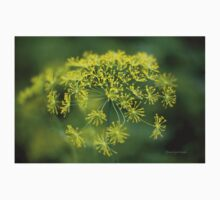 Dill Flower Lace (Anethum graveolens) Kids Clothes