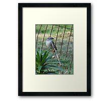Little Bird On The Fence Framed Print