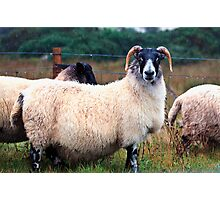 Don't Look at Me Like I was a Wet Sweater (On the road to Mallaig, Scotland) Photographic Print