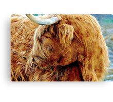 Shaggy Boy Canvas Print