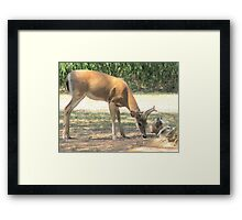 The Curious Buck and Powder Framed Print